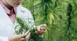 University of Melbourne trialling medical cannabis to treat epilepsy