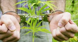 Father found guilty for growing cannabis for daughter