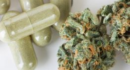 Zelda Therapeutics uncovers cannabis anti-cancer effect