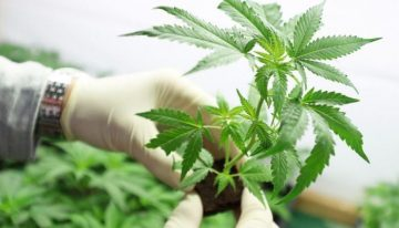 MMJ Phytotech Ltd share price climbs on Canadian update